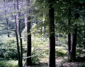 Boatswain Creek, Gaines's Mill Battlefield