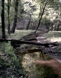 Dill Branch Creek and Ravine at Shiloh Military Park, TN. 2012