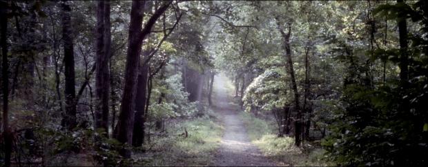 Trail to the Bull Run Creek Manassas Battlefield, Va 2011
