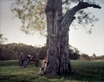 Union cannons next to an old scarred tree, Vicksburg Battlefield, MS. 2012