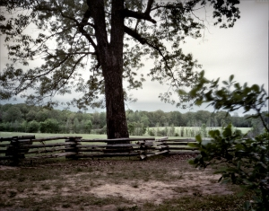 The Hornets Nest or Sunken Road at Shiloh.  Scene of intense fighting in 1862.