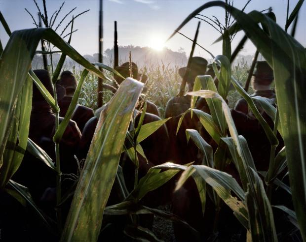 Sunrise, Black Hats in the Cornfield the 150th anniversary of the Battle of Antietam