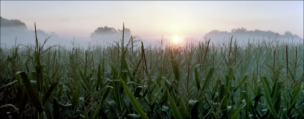 Sunrises through gun smoke in the Cornfield at Antietam, Sharpsburg, Md. 2012
