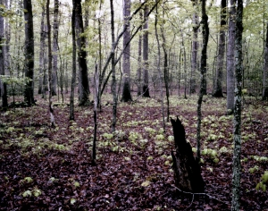 The wilderness on the Battlefield at Chancellorsville, Va 2013