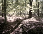 Evidence of Civil War trenches in the wilderness on the Battlefield at Chancellorsville, Va 2013