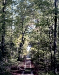 Forest road in the wilderness, Chancellorsville, Va 2013.