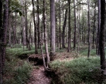Dense forests on the Battlefield at Chickamauga, Ga 2013.