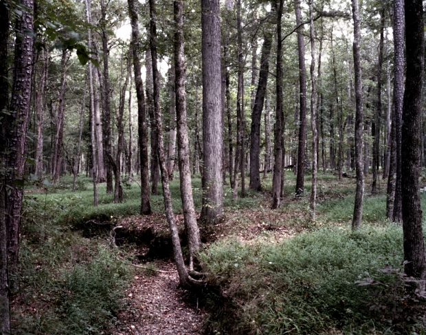 Dense forests on the Battlefield at Chickamauga, Ga 2013.