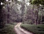 Dirt road through the wilderness at Chickamauga, Ga 2013.