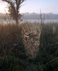 Spider webs in the Dyer Field on the Battlefield at Chickamauga, 2013