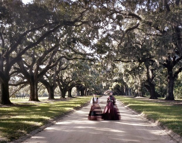 The Avenue of Oaks at Boone Hall Plantation, SC 2013