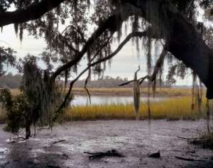 The tidal marshes around Boone Hall Plantation, SC