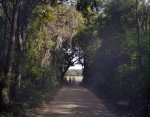 Country road at Boone Hall Plantation, SC 2013