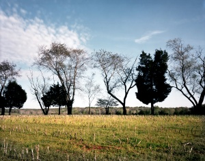 The cultivated fields of Ellwood Manor look out over the Wilderness Battlefield of 1864