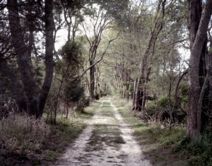 Country road on the Totopotomoy Creek Battlefield 2014