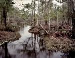 The Chickahominy River, Va 2014