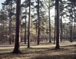 Open forest terrain at Cold Harbor 2014