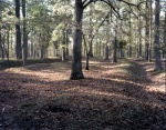 Mounds in the forest trace the Confederate trenches at Cold Harbor, Va 2014