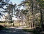 Dogwoods bloom along Hill-Ewell Drive on the Wilderness Battlefield 2014