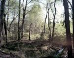 The Wilderness battlefield 2014