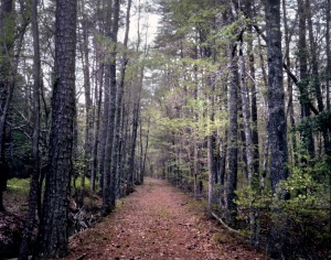 Old Railroad grade through the Wilderness used in Longstreet's flank attack on May 6th 1864