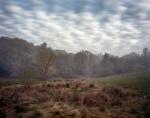 Sunrise in the Virginia Wilderness 2014