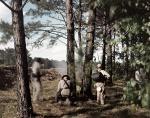 Reenactors skirmish among the trees at Resaca, Ga 2014