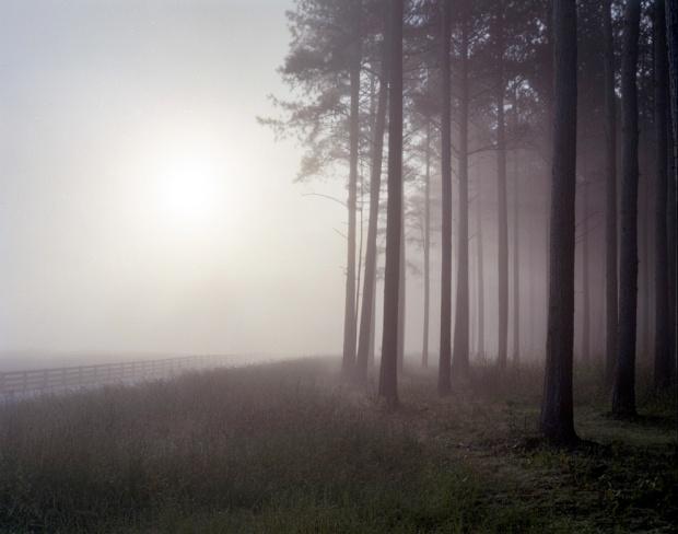 Fog strouds a pine forest near Rocky Face Ridge in Dalton, Ga 2014