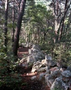 The rock wall at Dug Gap