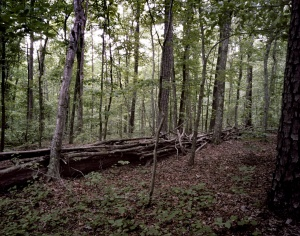 Reconstructed breastworks on the Battlefield at Pickett's Mill