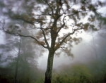 Fog and wind swept Bootens Gap in Shenandoah National Park