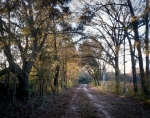 Typical road Sherman's troops would have encountered on their march to Savannah. Cooperville, Ga 2014