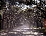 Live Oak drive at the Wormsloe Plantation