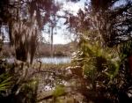 The marsh at Wormsloe Plantation, Ga
