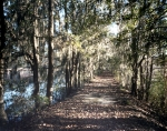 """This elevated road between old rice paddies was used by Union troops in the brief Battle of Shaw's Dam in 1864. The """"Union Causeway"""" is now part of a nature trail on the grounds of the Savannah Christian Preparatory School in Savannah, Ga"""