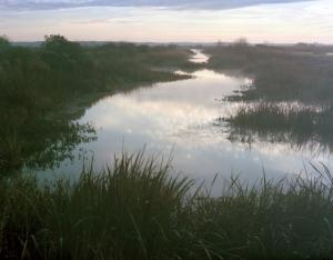Rice fields gone wild In Savannah Georgia