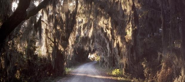 The Savannah Wildlife Refuge, South Carolina - 2014