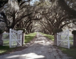 Spanish moss laden Live Oaks trees line the drive to the Tomotley Plantation in Beaufort County, South Carolina 2015