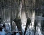 Union troops had to wade through these swamps while under fire during the Battle of River's Bridge