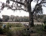 Picnic grounds at Magnolia Plantation