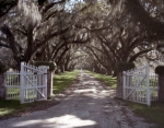 Live Oak trees line a plantation drive in South Carolina
