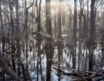 Salkehatchie Swamps at River's Bridge