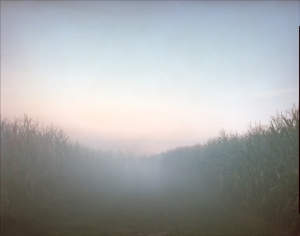 Gun smoke fills the Cornfield at Antietam 2012