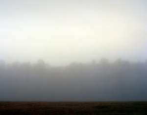 Fog shrouded tree line at Spotsylvania 2014